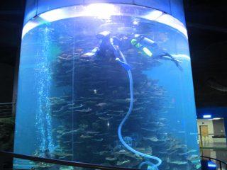 чист акрилен цилиндър голям рибен резервоар за аквариуми или океански парк