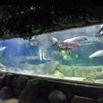 Персонализиран луксозен дизайн подводна дебела акрилна панели Аквариум прозорец Стъклен лист