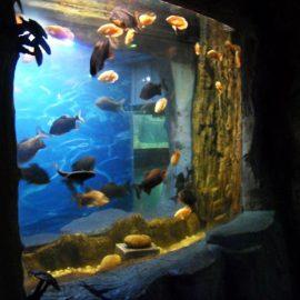 2018 Акрилен панел от най-високо качество за прозореца на аквариума