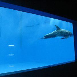 висококачествено Голям акрилен аквариум / прозорец на басейна подово дебел прозорец