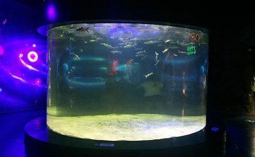 Акрилен резервоар за риба