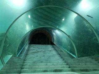 Цената на аквариума за акрилни тунели