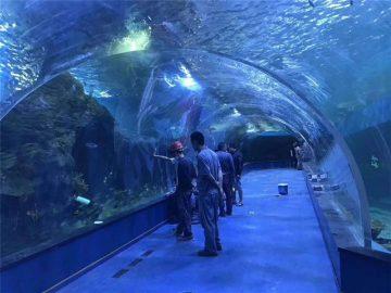 Персонализиран плексиглас акрилен тунелен аквариум