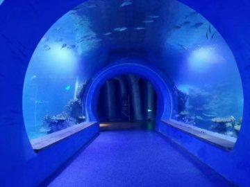 Висококачествен голям акрилен тунелен аквариум с различни форми