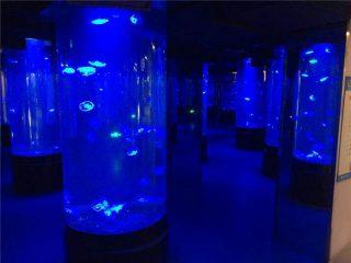 акрил медуза аквариум резервоар стъкло