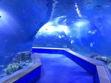 прозрачно акрилно стъкло Тунелен аквариум